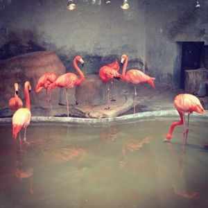 zoo12