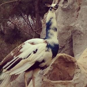 zoo32