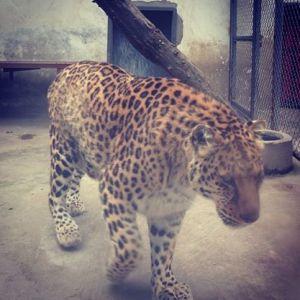 zoo55